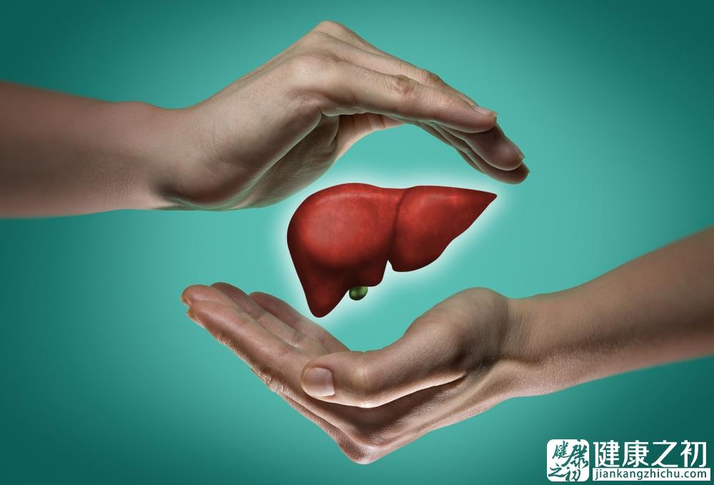 保护肝脏.jpg